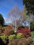 Saughton park - trees