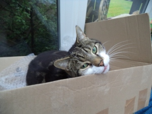 jacques in a box